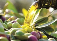Oljka in oljčno olje